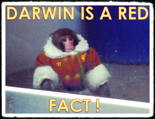 Darwin IKEA Monkey Red Liverpoool fan